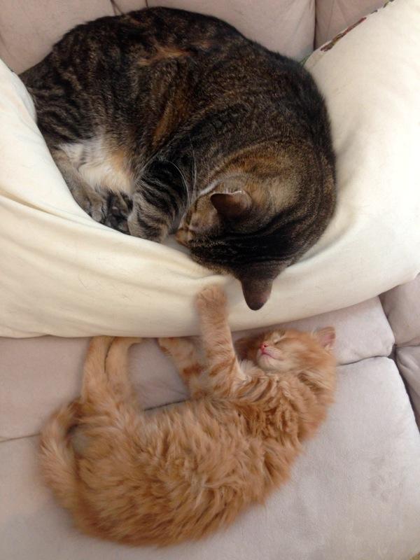 4cats4